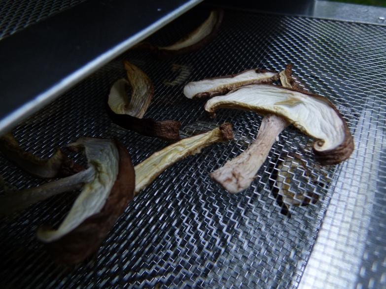Cogumelos desidratados